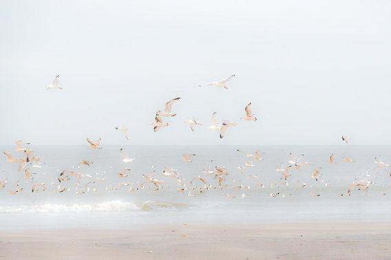 Vogels boven het strand
