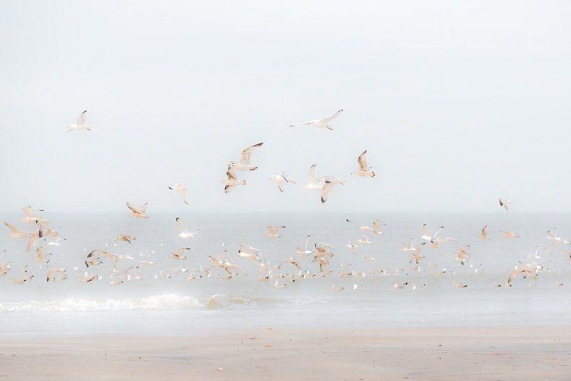 Vogels boven het strand van Eddy Westdijk