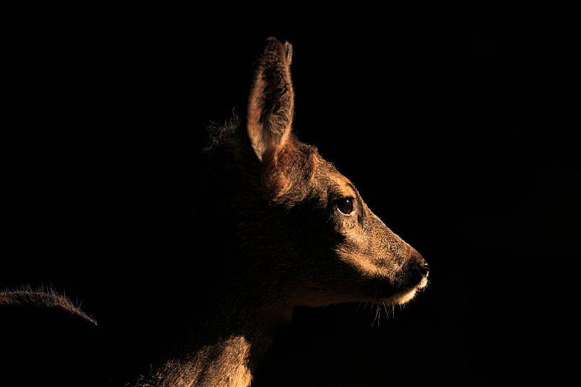 Rehe in der Dunkelheit von Dokra Fotografie