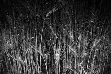 Weizen in schwarz weiß von Jan Brons