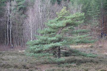 Lonely Tree van Erwin Delsman