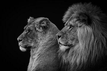 Löwe und Löwin Porträt in schwarz und weiß von Marjolein van Middelkoop
