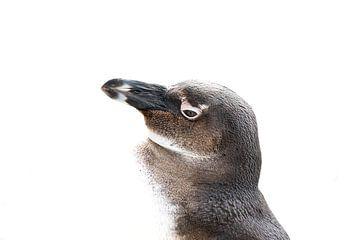 Stolz wie ein Pinguin von John Stijnman