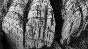 hout sructuren von