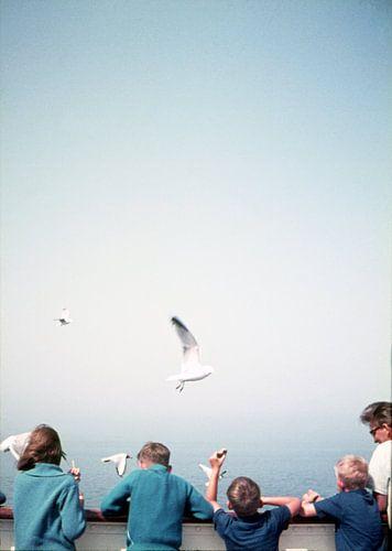 Seagulls sur