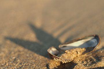 Schelp op het strand van de Opaalkust van Astrid Brouwers