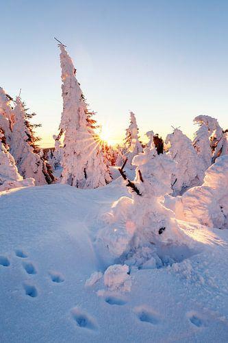Verschneite Bäume auf dem Brocken van Oliver Henze