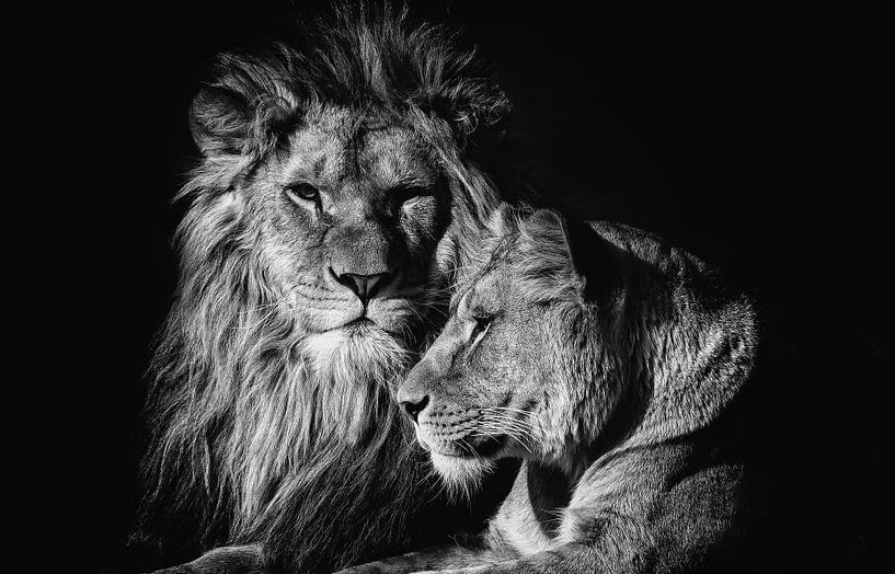 Lion von Ron van Zoomeren
