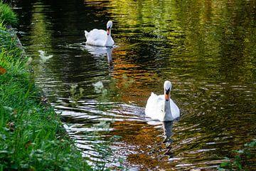 Zwanen in het park von Henri Witteveen