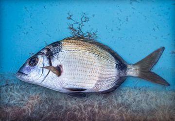 Frisch gefangenem Fisch von Marcel van Balken