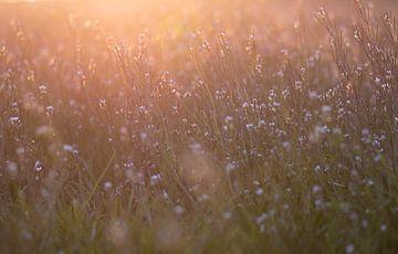 Feld mit sonnigen Blumen von Tania Perneel