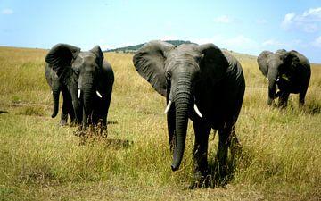Olifant Masai Mara Kenia van Gerrit  De Vries