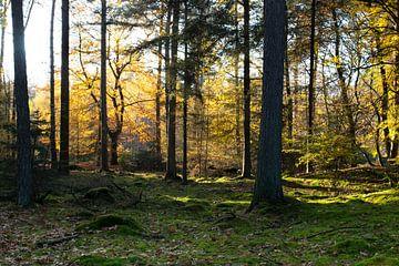 Sonniger Herbst Foto Waldmuskel von Melissa Zwiep