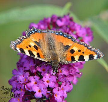 Vlinder van Hanney Bruijn Fotografie