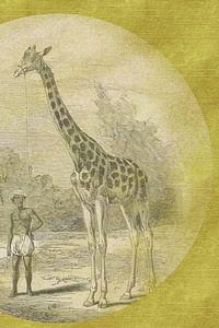 Giraffe mit Diener auf Gold skizziert