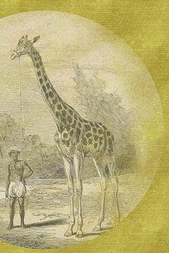 Giraf met begeleider geschetst op goud van Jadzia Klimkiewicz