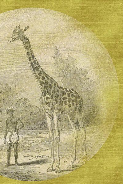 Giraffe mit Diener auf Gold skizziert von Jadzia Klimkiewicz