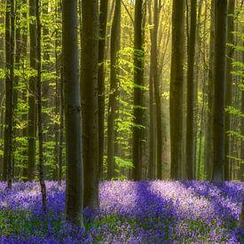 Hyacintenbos von Lars van de Goor