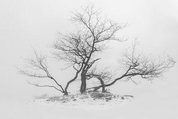 Boom in de sneeuw van Ans Bastiaanssen