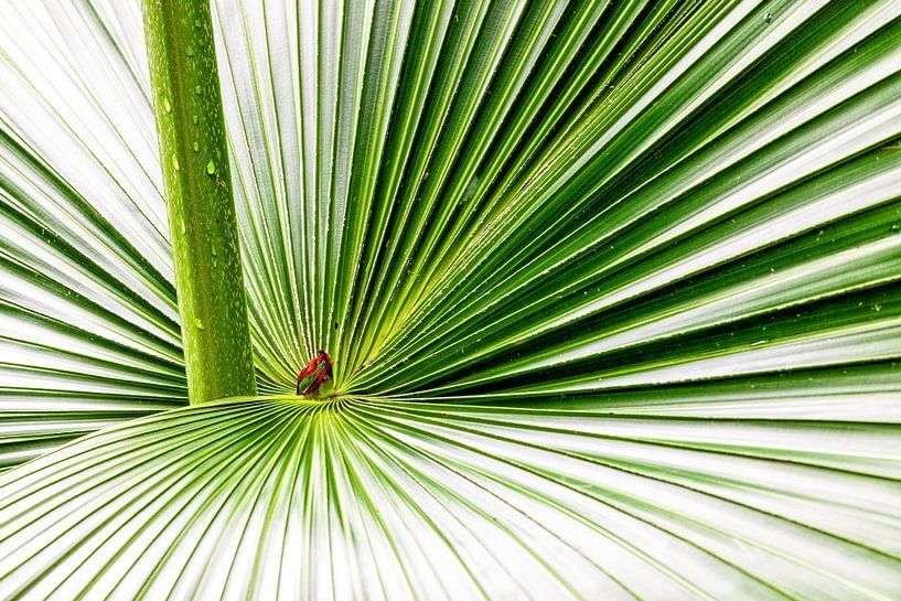 Feuille de palmier sur Tilo Grellmann   Photography