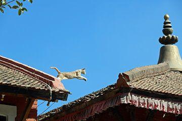 springende kat in Patan Nepal van Marieke Funke