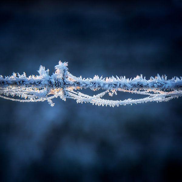 Barbed wire in blue van Ruud Peters
