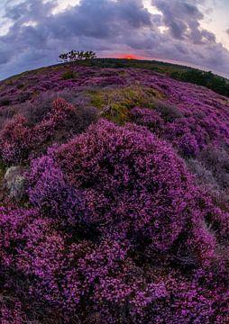 Heide bij Bergen 4 van Peter Heins