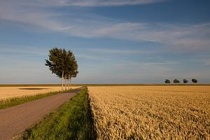 Bomen in de polder van Kars Kuiper