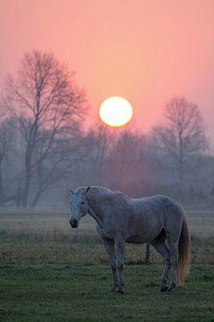Cheval au lever du soleil sur Bart Ceuppens