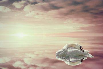 A swan's reflection. von Elianne van Turennout