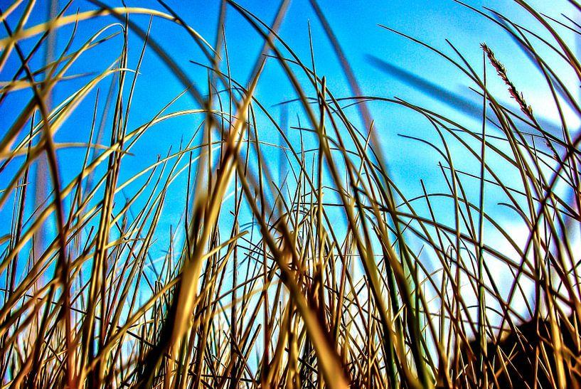 Sylt in de duinen van List van Norbert Sülzner