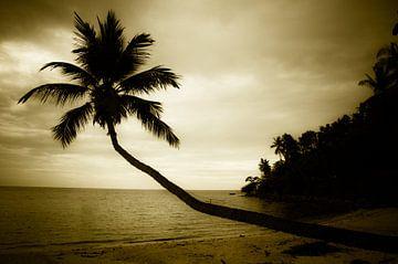 Palmboom strand von Bart van Woudenberg
