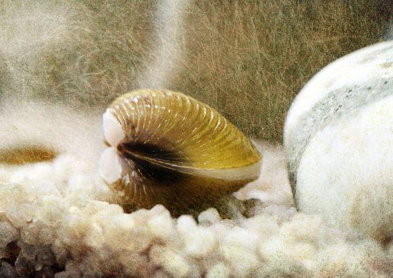 Teichmuschel mit texture van Rosi Lorz