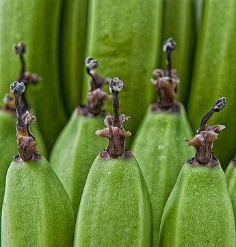 Hortus botanicus von Susanne Stoop