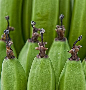 Hortus botanicus van Susanne Stoop