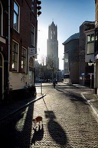 Domtoren Utrecht vanuit Schoutenstraat, met kat