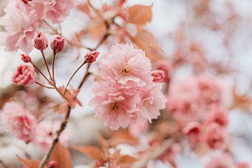 Rosa Blüte - botanische Fotografie von Eleana Tollenaar