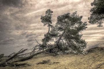 Baum auf Düne von Fotografie Arthur van Leeuwen