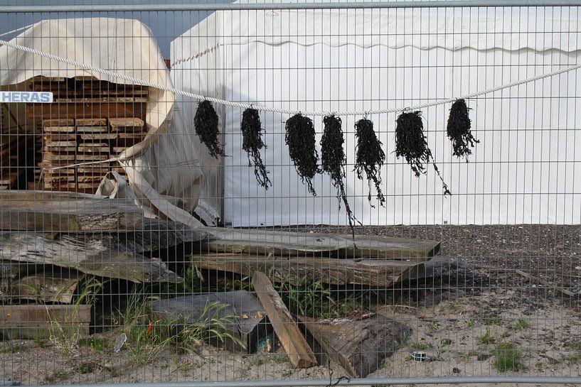 Zeewier aan de lijn van Jetty Boterhoek