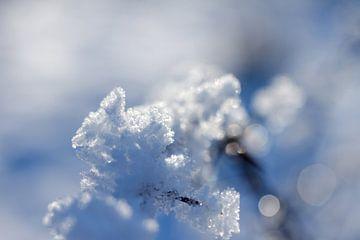 macrofoto met tegenlicht, sneeuw en rijp in de natuur in Drenthe van Karijn Seldam