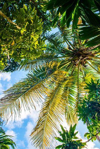 Groene palmboom in Cuba
