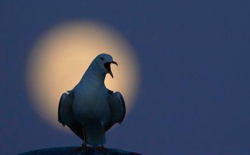 Stormmeeuw en de maan van Beschermingswerk voor aan uw muur
