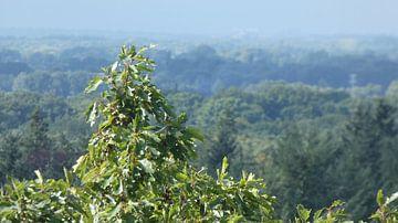 Uitzicht in de natuur op een bomentop vanaf het bos van Wilbert Van Veldhuizen