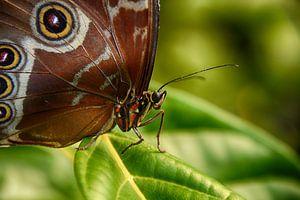 Papillon de liberté et de chaleur sur Hanneke Duifhuize