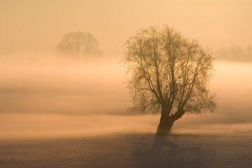 Boom in mist van Jelmer Reyntjes