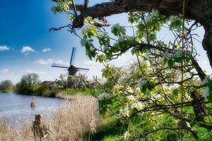 Le vieux moulin dans le paysage de la Betuwe sur Tina Linssen