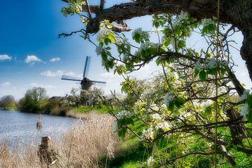 De ouwe molen in de Betuwe landschap van Tina Linssen