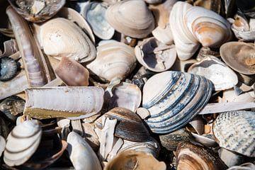 Hollandse schelpen van Marjo Kusters