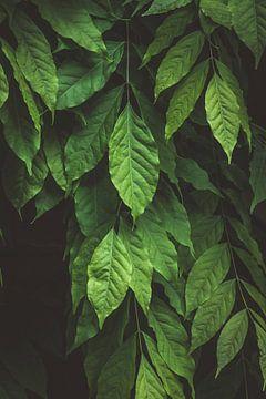 Grün verlässt die Natur in Utrecht, Niederlande von Lisanne Koopmans