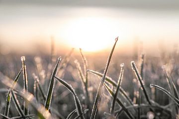 Een magisch tafereel | Dauw bij zonsopkomst van Wendy Boon